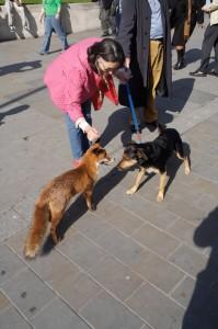 foxy_dog
