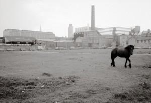 08-THE EAST END HORSE. E.2-72
