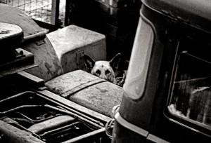 01-JUNK YARD DOG. E.16-82