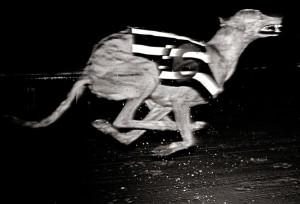 16-Dog Racing. E.17-82