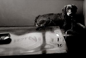 DOG. E.1-1982
