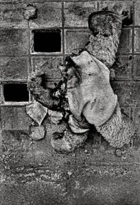 Headless Bear. E.2-64