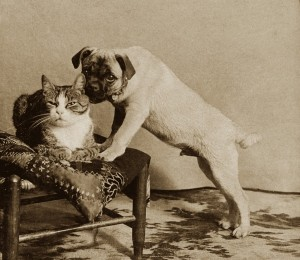 cat and pug S-1