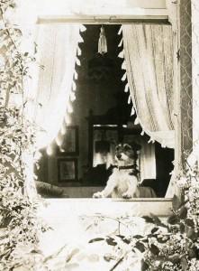 window S