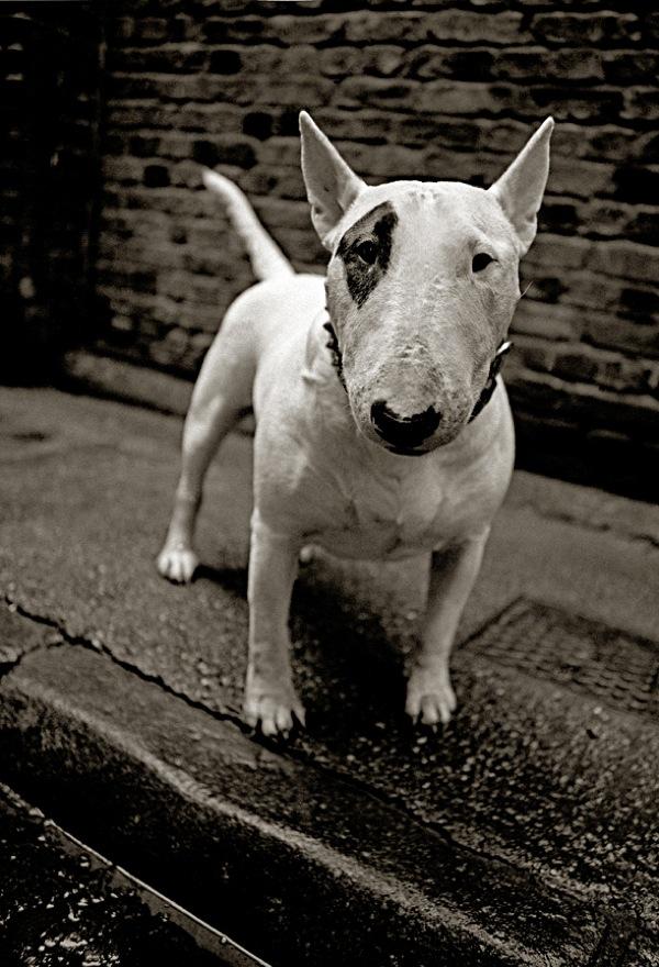 Oliver Twist Dog Name