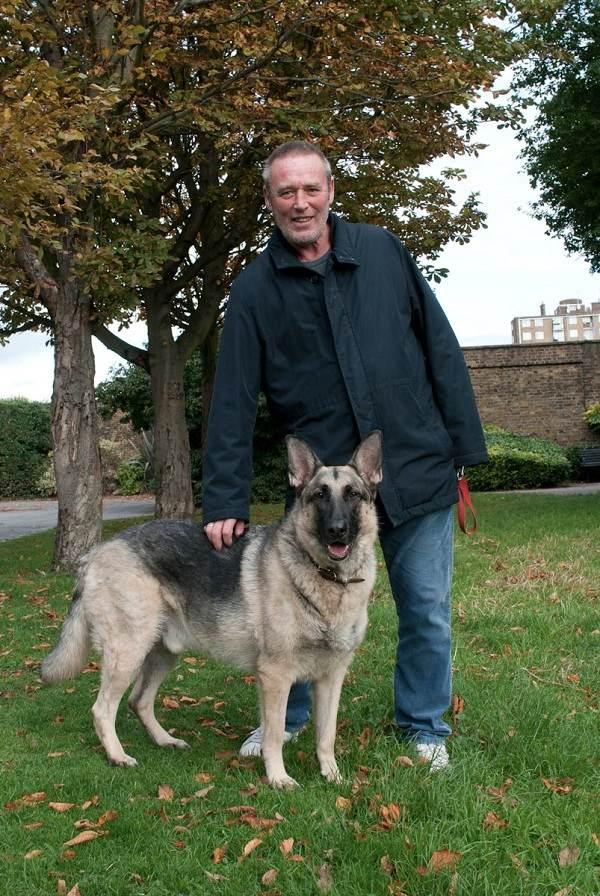 German Shepherd Runt Max  german shepherd   amp  joe German Shepherd Runt