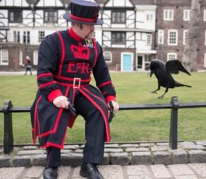 Ravens_005
