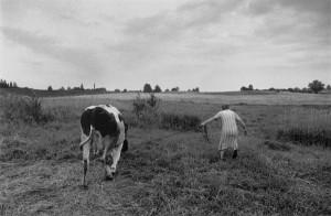 CK:OW:6:Kazia&cow-84