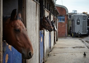 West London stables